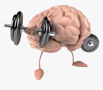 260-2601870_transparent-strong-brain-clipart-brain-muscle